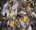 Ocho de cada 10 españoles desconocen que la mayoría de especies sufren sobrepesca en Europa